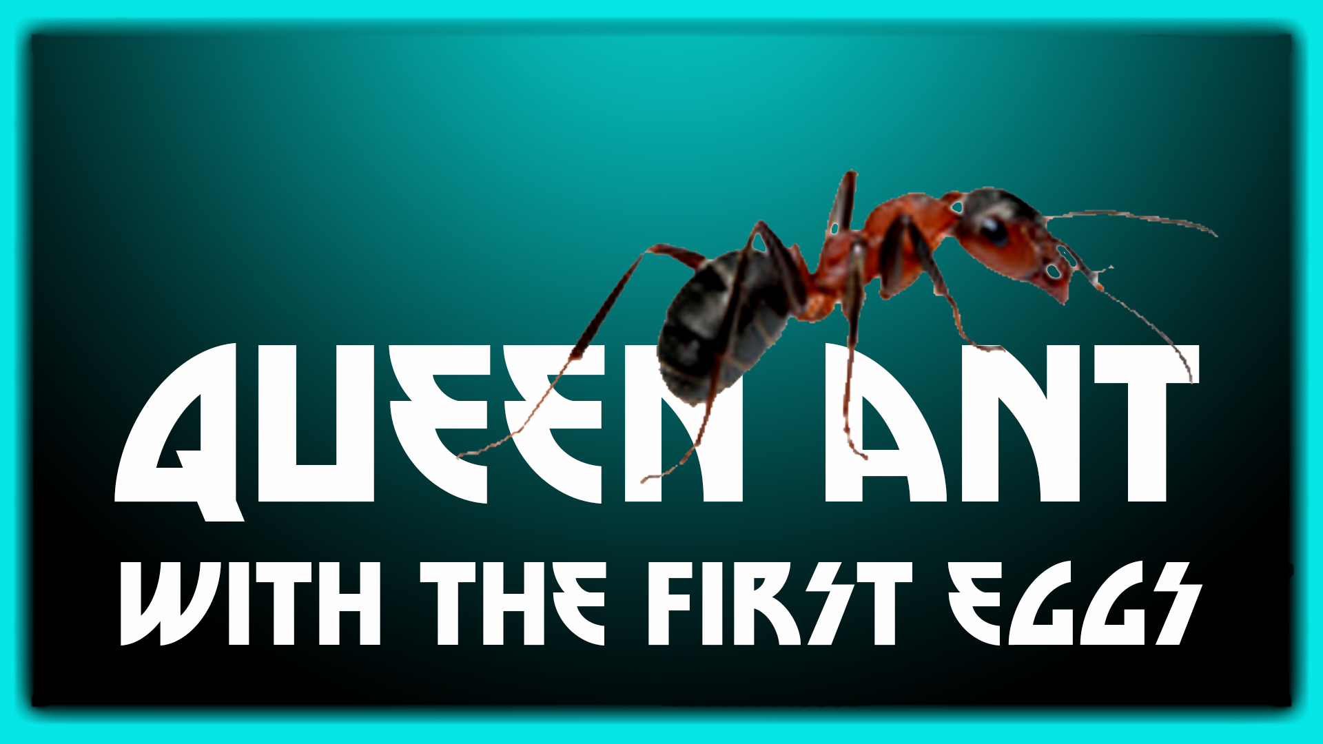 queen ant first eggs